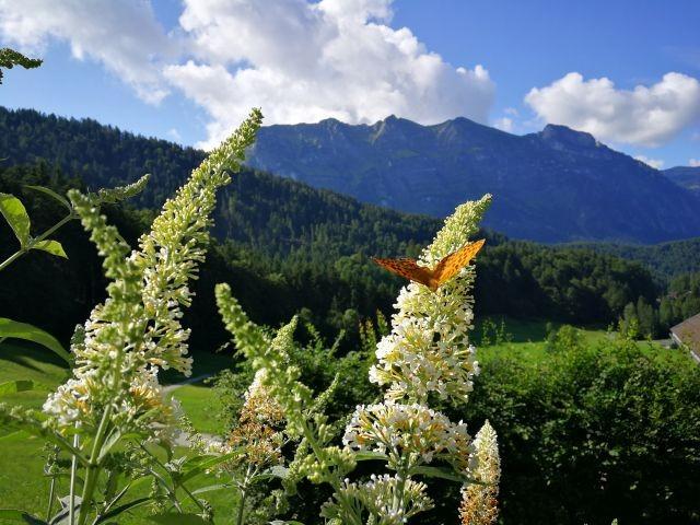 Natur pur mit Aussic ht