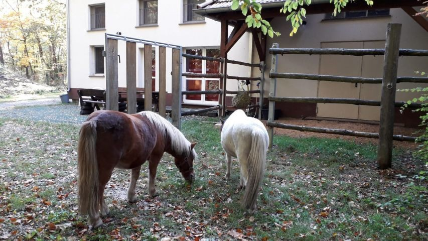Ponys zu Gast