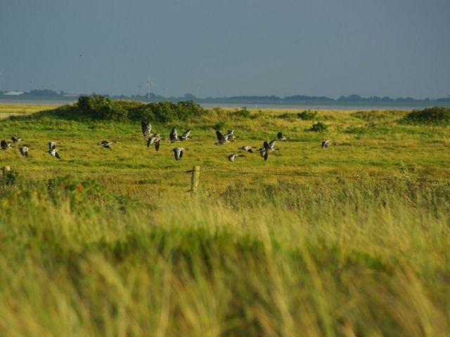Vögel in der Dünenlandschaft