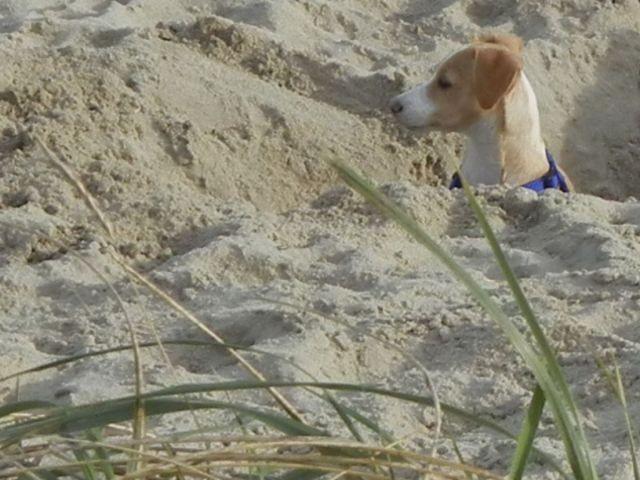 Weitläufiger Strand, auch für unsere Vierbeiner