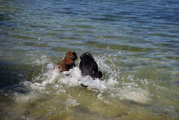 Badesee Hunde Erlaubt