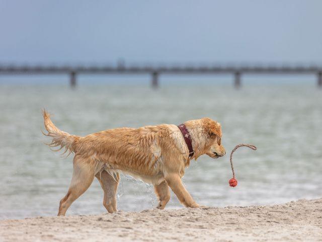 genießen Sie Spaziergänge mit ihrem Vierbeien am Strand