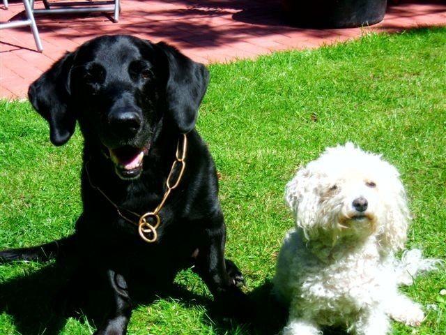 Unsere Hunde freuen sich über viele Artgenossen