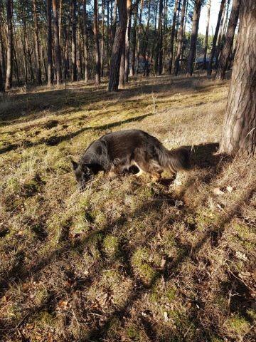 Für Hunde gibt es immer wieder etwa neues im Wald zu entdecken