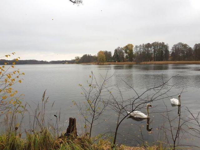 Der Kutzingsee- nur einer von vielen Seen in der Umgebung- mit Bademöglichkeiten