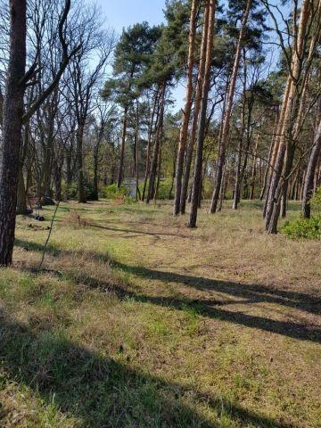 Das komplett eingezäunte helle Wald-Grundstück