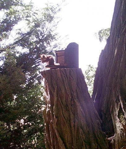 Ein Wald-Bewohner- drekt von der Terrasse aus zu beobachten