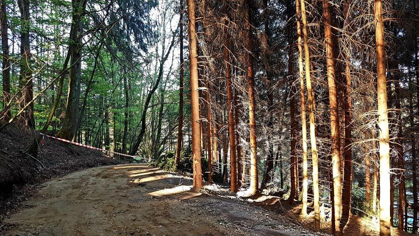 Privatwaldweg direkt hinterm Garten