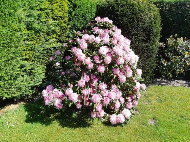 Gartenanblick