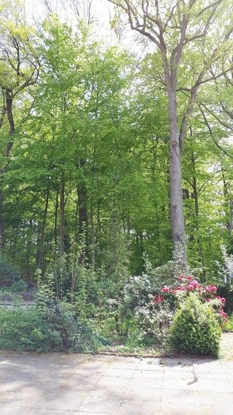 Blick von der Frühstücksterrasse ins Grüne