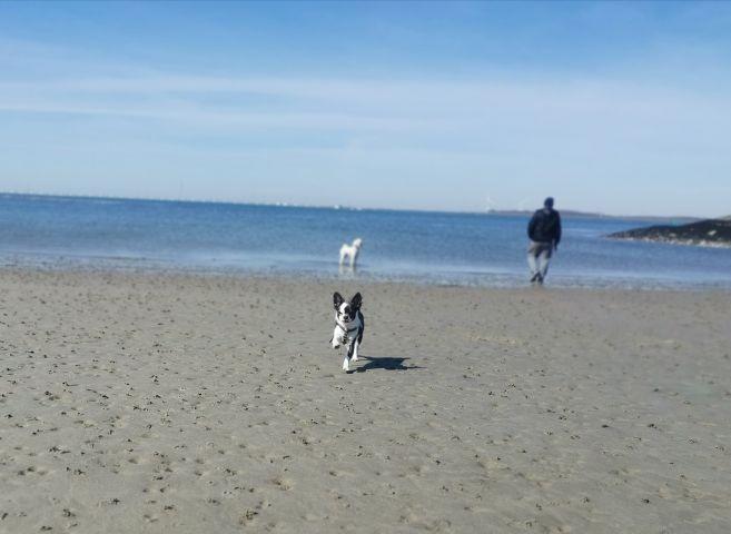 kleiner Strand von Stavenisse 1km fußläufig