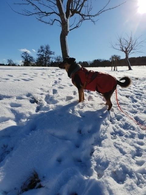 Lehningen im Schnee