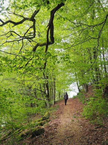 Wandern im Kleinen Wiesental