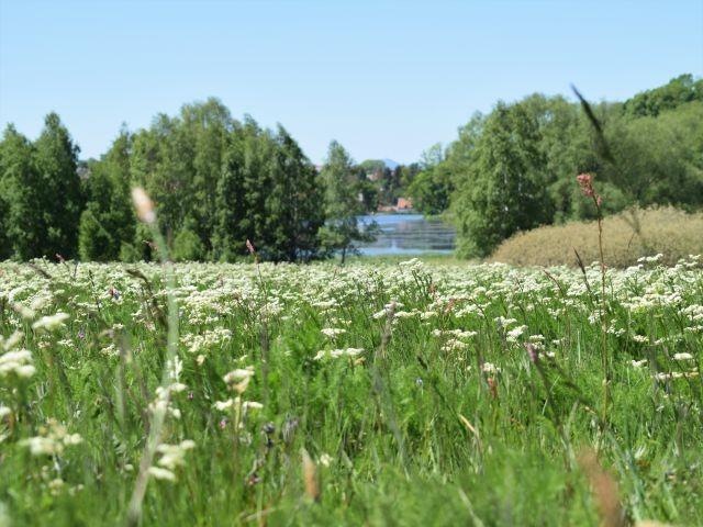 ... die Wiesen im Mai