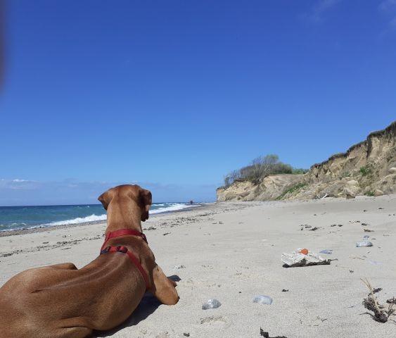 Hunde können ganzjährig mit an den Strand