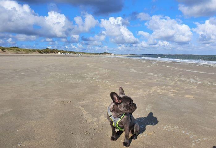 Unsere Luna allein am Strand