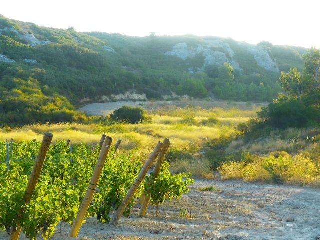 pittoreske Wanderwege durch das Naturschutzgebiet des Clape-Massiv