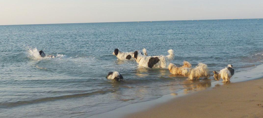 Paradies für Wasserratten und Strandläufer