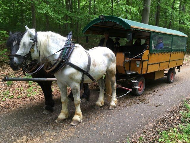 Kutschfahrten durch den Wald und übers Land können vor der Haustür beginnen. Hunde sind auch erlaubt.