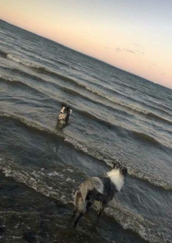 Geltinger Bucht, Naturstrand, Nachbarhunde