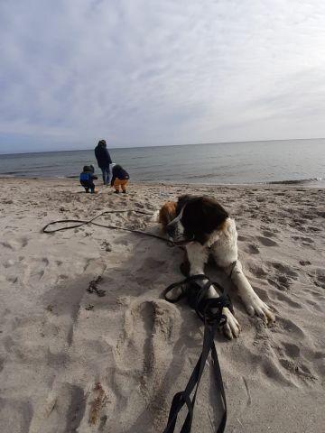 Ostsee Falshöft, Familienhund