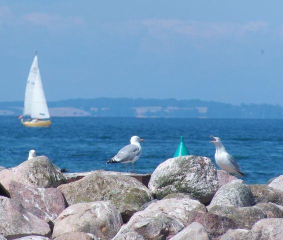 Hafen, Gelting Mole, Segeln, Surfen, Kite-Surfen, Stand up paddling
