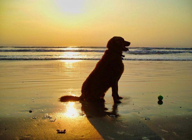 Ihr Hund wird den Strand lieben