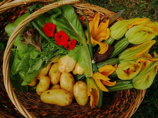 Früchte aus unserem Gemüsegarten