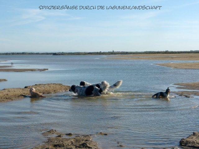 vierbeinige Wasserratte können  sich in den Lagunenlandschaften am Ortsende austoben