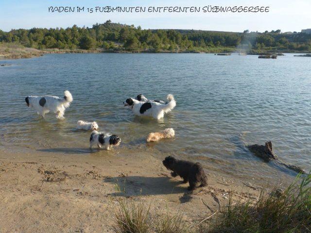 der nahegelegene Natursee, der Hunde mit seinem Süßwasseranteil zum Trinken und Baden einlädt
