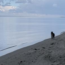 Strandnahe Ferienwohnung mit Hund Villa Waldblick Baabe