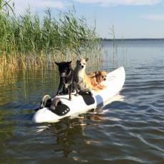 Wassergrundstück mit Südbalkon, Angeln, Sauna, Hunde